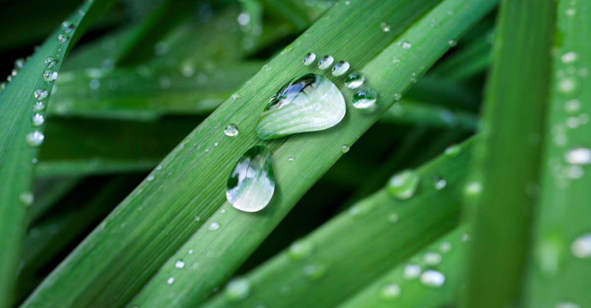 Carbon capture - leaves with water footprint
